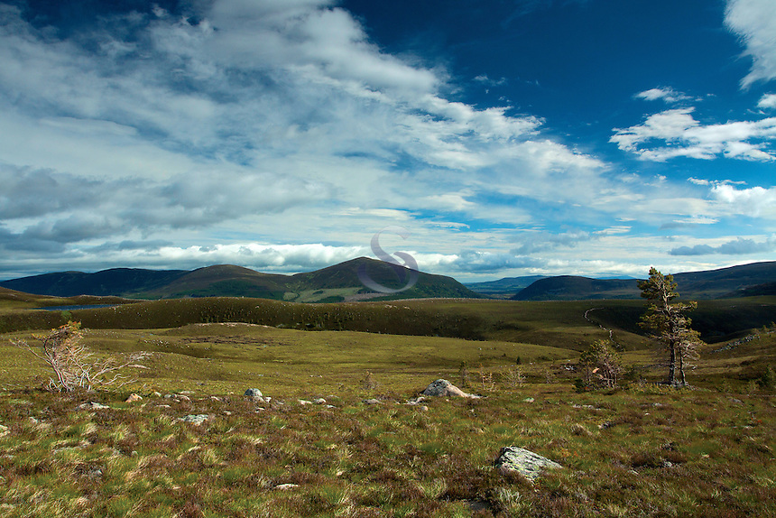 Meall a Bhuachaille from Glenmore Forest Park, Cairngorm National Park, Badenoch & Speyside