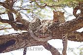 Dr. Xiong, ANIMALS, wildlife, photos, AUJX126,#a#