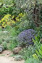 L'Occitane Immortelle Garden, Chelsea Flower Show, 2012. Designed by Peter Dowle to recreate the Corsican Maquis. Bright yellow immortelle flowers (Helichrysum italicum) and plants such as French lavender (Lavandula stoechas), poppies, rosemary, myrtle, artemisia and mint dominate the garden.