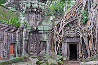 Angkor Wat, Cambodia - Strangler fig (Ficus sp. ) tree roots on the ancient Preah Khan Temple