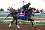 Knicks Go, trained by trainer Brad Cox, exercises in preparation for the Breeders' Cup Dirt Mile at Keeneland Racetrack in Lexington, Kentucky on November 4, 2020.