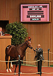Hip #84 Galileo - Egyptian Queen at the Keeneland September Yearling Sale.  September 10, 2012.