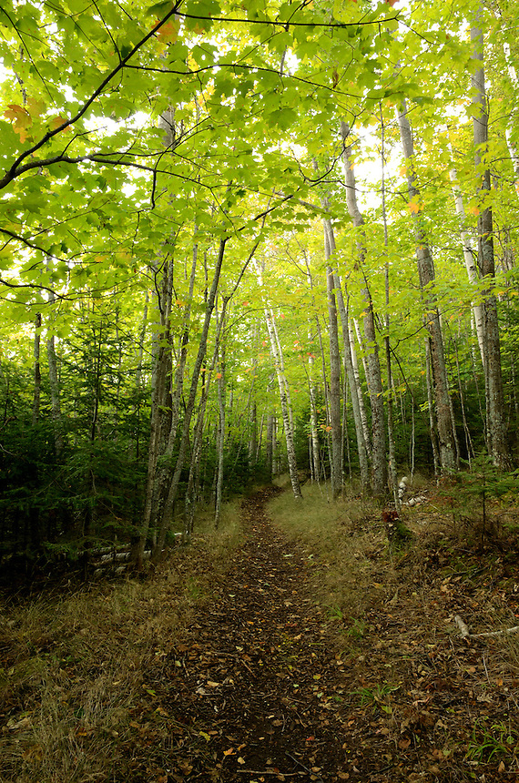 A beautiful hiking trail on Presque Isle surrounded by maple and birch trees. Marquette, MI