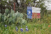 Bluebonnets, Paintbrush, Cactus, all in Texas
