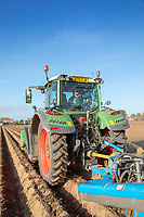 Harvesting potatoes - Lincolnshire, October