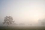 Europa, DEU, Deutschland, Nordrhein Westfalen, NRW, Rheinland, Niederrhein, Alpen-Menzelen, Morgenstimmung, Nebel, Dunst, Bei Sonnenaufgang, Baeume, Kategorien und Themen, Natur, Umwelt, Landschaft, Jahreszeiten, Stimmungen, Landschaftsfotografie, Landschaften, Landschaftsphoto, Landschaftsphotographie, Wetter, Wetterelemente, Wetterlage, Wetterkunde, Witterung, Witterungsbedingungen, Wettererscheinungen, Meteorologie, Wettervorhersage<br /> <br /> [Fuer die Nutzung gelten die jeweils gueltigen Allgemeinen Liefer-und Geschaeftsbedingungen. Nutzung nur gegen Verwendungsmeldung und Nachweis. Download der AGB unter http://www.image-box.com oder werden auf Anfrage zugesendet. Freigabe ist vorher erforderlich. Jede Nutzung des Fotos ist honorarpflichtig gemaess derzeit gueltiger MFM Liste - Kontakt, Uwe Schmid-Fotografie, Duisburg, Tel. (+49).2065.677997, <br /> archiv@image-box.com, www.image-box.com]