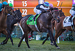 DEL MAR, CA - DECEMBER 04: Miss Temple City #12, ridden by Javier Castellano win the Matriarch Stakes at Del Mar Thoroughbred Club on December 4, 2016 in Del Mar, California. (Photo by Zoe Metz/Eclipse Sportswire/Getty Images)