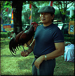 Indonesians have been keeping birds for ages. In the traditional Javanese culture a Javanese man should look for a wife, house, vehicle, kris (traditional Javanese knife) and a bird. The bird resembles a hobby and therefore a balanced life. Here a bekisar (a cross between female domestic chicken and male jungle fowl) competition. In this competition the chicken are judged upon appearance and their cockle doodle. It is a tough sport and considered to be more humane than cockfighting, another popular pastime in Indonesia. Owners baby their chickens so they have the best cockle doodle doo. Judges line up to inspect the chickens during competition. The chickens cost upwards between $50 and $100 US which for Indonesians can sometimes be up to a few months wages.