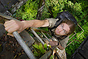 Alex Hyde climbing a tree ladder to access the rainforest canopy. Danum Valley, Sabah, Borneo.