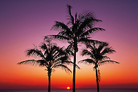 Palm beach, Florida Keys