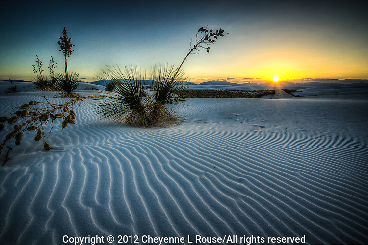 Crazy Yucca - New Mexico - White Sands National Monument