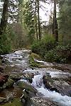 Oregon Coast, Necarney Creek, Oswald West State Park, Oregon, Pacific Northwest, North America, Oregon Coast,