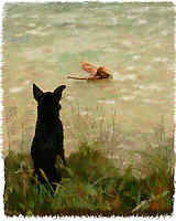 A painted image of an Austrailian Cattledog sitting on the shore watching a Golden Retriever swim in a lak