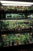 Three tiered orchid light cart: grow plants under lights using four fluorescent tubes.