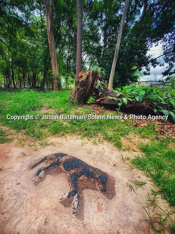 Pictured:  'Stray'. Created using found stones - on a site where the stray dog lay. The shadow is created from wet sand. <br /> <br /> A British artist stuck in Thailand has spent his time constructing masterpieces from pebbles for locals to enjoy.  Justin Bateman had only planned on staying in Chiang Mai for a week - but has remained there now for nearly ten months after the pandemic struck. <br /> <br /> His pebble portraits include The Queen, Spanish painter Pablo Picasso, Michelangelo's David and a local farmer - who was bemused by his portrait.   Mr Bateman, from Portsmouth, Hants, was staying in Bali when he travelled to Chiang Mai, in Thailand, to visit some friends.   SEE OUR COPY FOR DETAILS.<br /> <br /> Please byline: Justin Bateman/Solent News<br /> <br /> © Justin Bateman/Solent News & Photo Agency<br /> UK +44 (0) 2380 458800