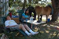 Two ponies, Destiny and Hank stand in the shade of a tree at the corner of Opal and Everts Street in the suburban neighboorhood of Pacific Beach San Diego City, Tuesday October 23, 2007.   The horses and their owners,  Thom Winter and Amy Whidden-Winter  brought their ponies and dogs (Listo and Muddy) to Amy's mother's home in PB after they were evacutated from Poway on Monday evening.  Wildfires burning in the area near their home forced the evacuation.  Amy spent the night outside, sleeping on the cot in the background to keep an eye on her two beloved ponies.  Her daughter had returned to check on there home which has apparently survived the fires.