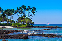 Black lava rock shores with beautiful palm trees and a colorful boat sailing the Pacific Ocean's turquoise water, in the Big Island of Hawaii
