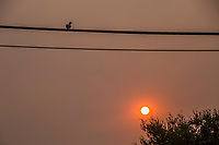 A Mourning dove, perched on a utility line, watching a red sun, filtered through smoke from the Dixie, Caldor and other wildfires burning in California.