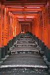 A person walks through Torii gates, Fushimi Inari Shrine, Kyoto, Honshu, Japan , Fushimi Inari-taisha