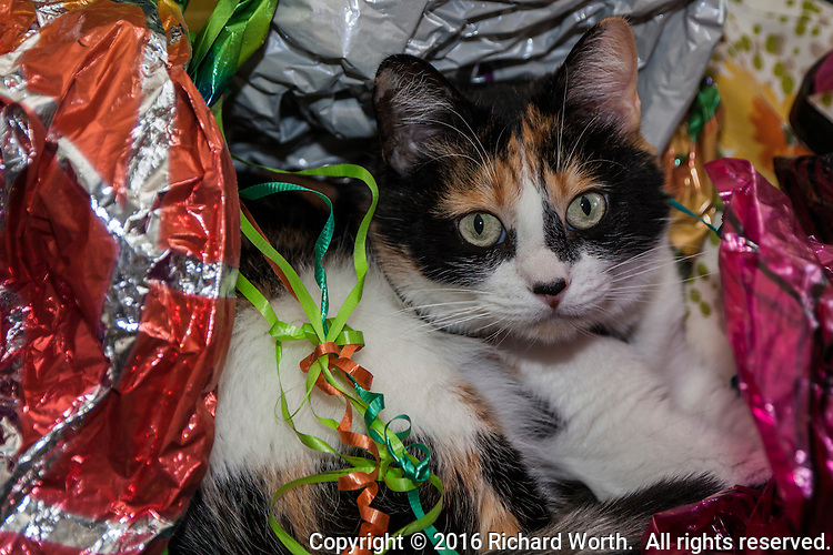 Cat surrounded by remnants of party balloons and ribbons.