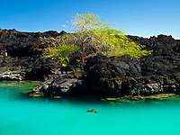 A single turtle swims along the rocks of Kiholo Bay on the Big Island.