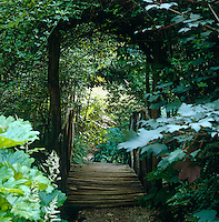 A rustic bridge at the end of a gravel path is approached through an ivy-covered arbour