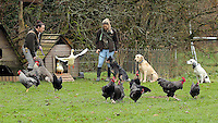 FAO JANET TOMLINSON, DAILY MAIL PICTURE DESK<br /> Pictured: Employees with dogs hens and geese at the farm Wednesday 23 November 2016<br /> Re: The Dog House in the village of Talog, Carmarthenshire, Wales, UK