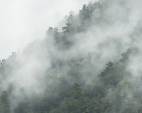 Rainforest in mist, Westland Tai Poutini National Park, UNESCO World Heritage Area, West Coast, New Zealand, NZ