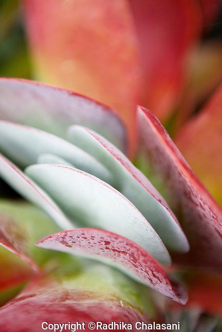 MANHATTAN BEACH, CA-SEPTEMBER 01: Plants