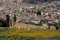 Fez, Morocco - Zawiya of Moulay Idris II, to right of center.  Kairouyine Mosque, left of center.  Satellite Dishes on Houses in the Old City Illustrate the Transition between Old and Modern.