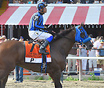 Private Zone (no. 7), ridden by Martin Pedroza and trained by Jorge Navarro, wins the 36th running of the grade 1 Forego Stakes for three year olds and upward on August 29, 2015 at Saratoga Race Course in Saratoga Springs, New York. (Bob Mayberger/Eclipse Sportswire)