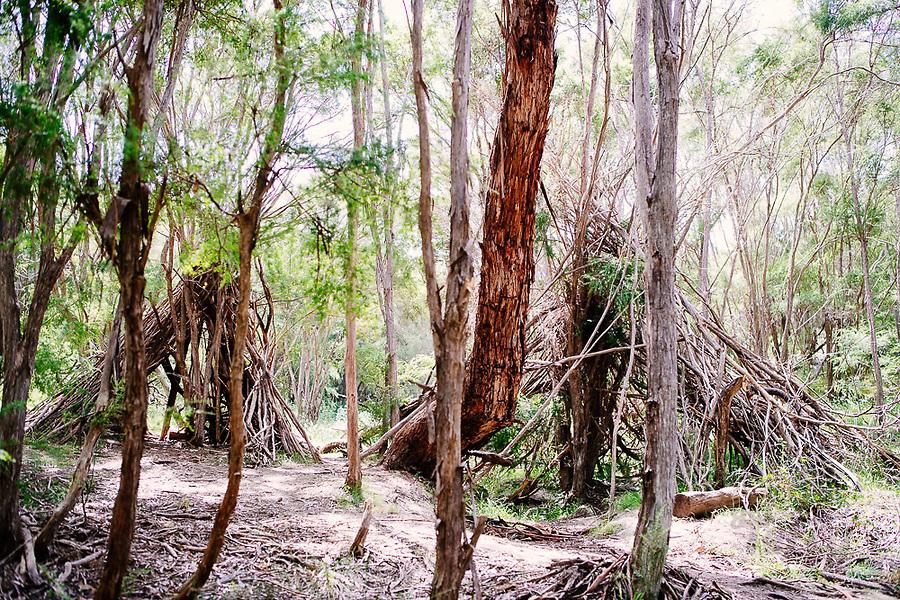 Image Ref: YV514<br /> Location: Mount Lofty, Wonga Park<br /> Date of Shot: 22.11.20