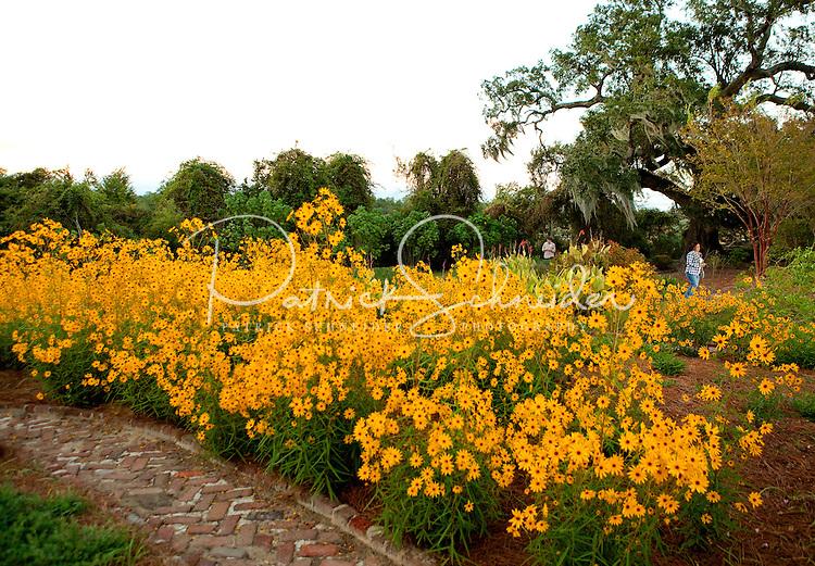 Charleston, SC | Wild Dunes in the Isle of Palms, South Carolina, travel photography, tourism,
