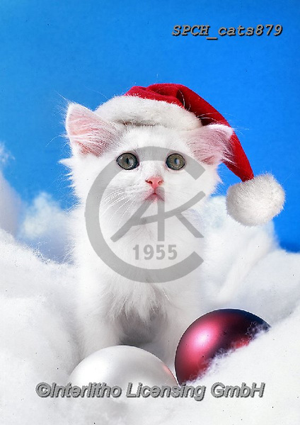 Xavier, CHRISTMAS ANIMALS, WEIHNACHTEN TIERE, NAVIDAD ANIMALES, photos+++++,SPCHCATS879,#xa# ,cat