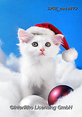 Xavier, CHRISTMAS ANIMALS, WEIHNACHTEN TIERE, NAVIDAD ANIMALES, photos+++++,SPCHCATS879,#xa# ,cat