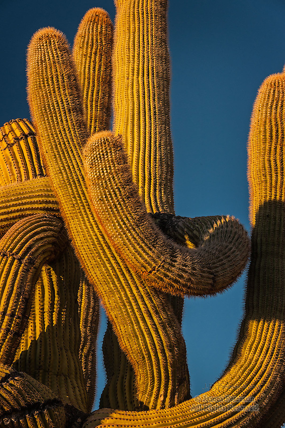 The Embrace, near Hualapai Mountains, Arizona