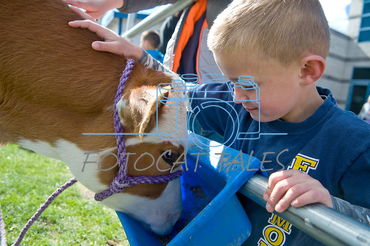 Ryder Rubke, 6, of Fremont Elementary School in Carson City, Nev., participates in the cow plop fundraiser, where he was able to meet Buttercup, a Holstein Ayrshire mix Friday, April 15, 2016.<br /> Photo by Candice Nyando