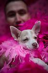 18/08/2013 Pink Dog Show