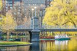 The Swan Boats and springtime in the Boston Public Garden, Boston, MA