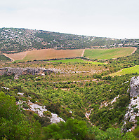 Domaine d'Aupilhac. Montpeyroux. Languedoc. Garrigue undergrowth vegetation with bushes and herbs. Les Cocalieres recently planted magnificent vineyard plot on the hill slope. France. Europe. Vineyard. Mountains in the background.