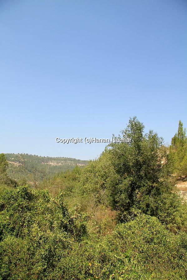 Israel, Ein Eshkaf in Jerusalem Mountains