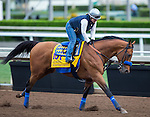 ARCADIA, CA - NOV 01: Hoppertunity, owned by Michael E. Pegram, Karl Watson & Paul Weitman and trained by Bob Baffert, exercises in preparation for the Breeders' Cup Classic at Santa Anita Park on November 1, 2016 in Arcadia, California. (Photo by Kazushi Ishida/Eclipse Sportswire/Breeders Cup)