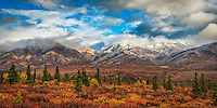 A photo of Denali's fall colored tundra and snow capped mountains. Fine Art Landscape Photography