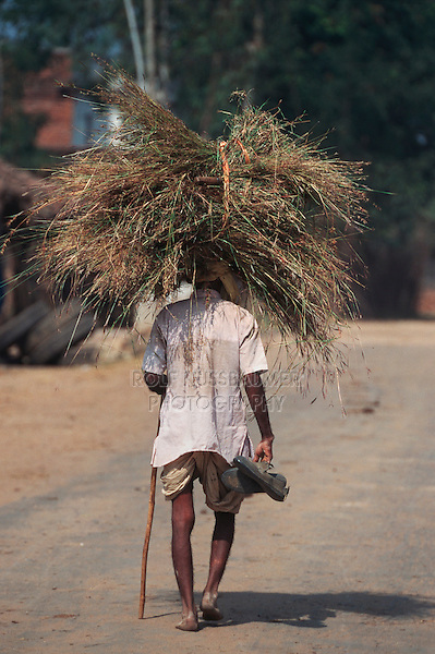 Indian man carrying hay on head, Rajasthan, India