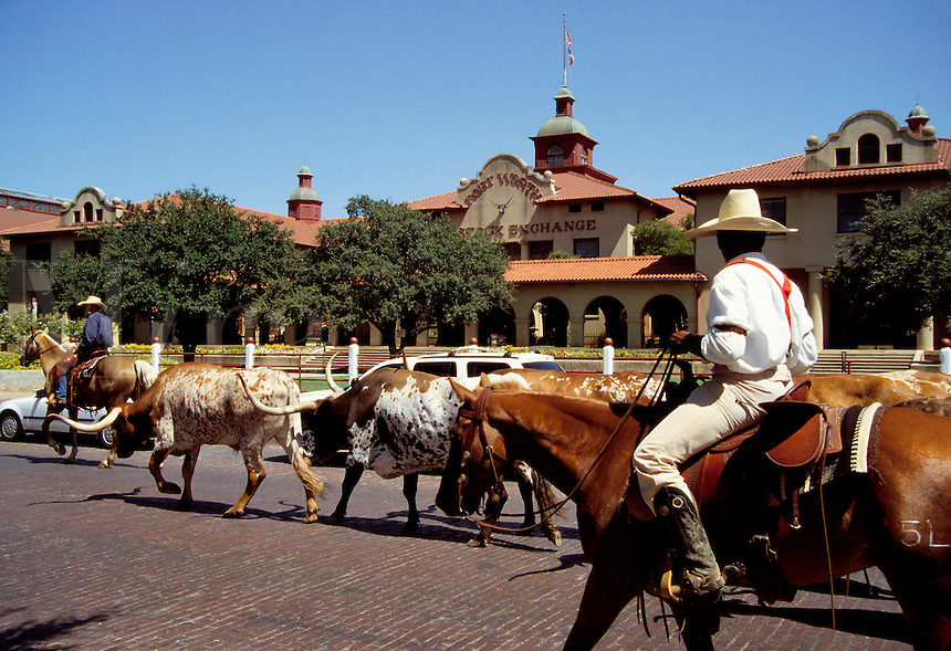 Daily cattle drive on Exchange Avenue in the Stockyards National Historic District recalls Ft. Worth's long history as a cattle center. Ft. Worth, Texas