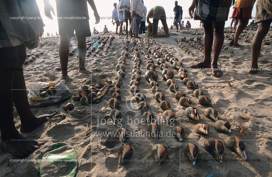 INDIA, Nagapattinam, coast fisherman with seashells /  INDIEN Nagapattinam, Küstenfischer mit Muschel Fang