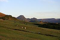 Weiden im Osten der Insel Flores, Azoren, Portugal