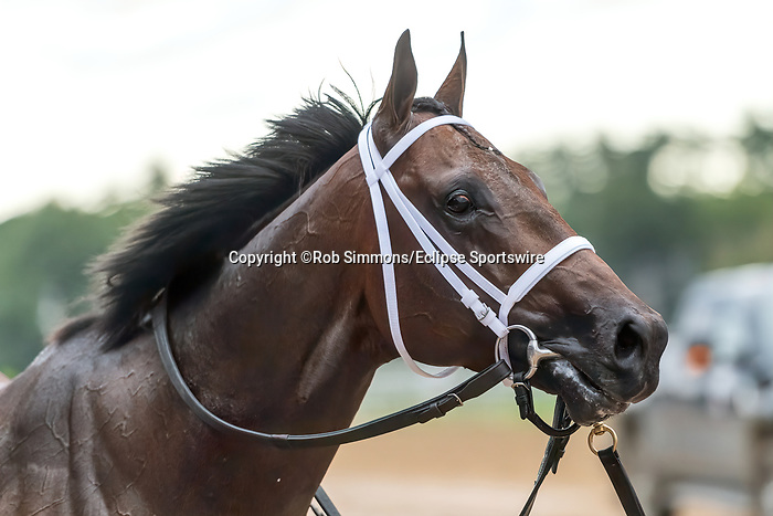 September 05, 2020: Global Campaign #4, ridden by Luis Saez, trained by  S.M. Hough wins the Woodward Stakes gr1 at Saratoga Race Course in Saratoga Springs, New York. Rob Simmons/CSM