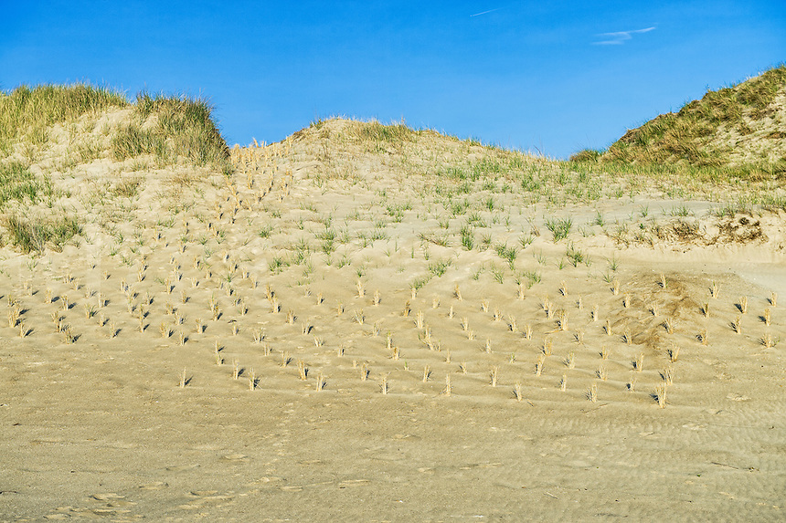 Coastal dune preservation from erosion through grass planting initiative, Cape Henlopen, Lewes, Delaware, USA