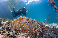 Blue water with cardinalfish and diver